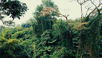 la jungle colombienne